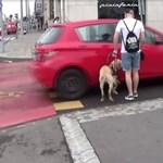 Jelentkezett a sofőr, aki majdnem elütött egy vakot, de szerinte a vakvezető kutya hibázott