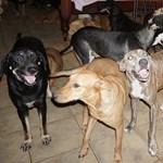 97 kutyát fogadott otthonába egy bahamai nő, mielőtt lecsapott a Dorian