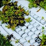 A természet uralma az iroda felett
