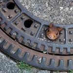 Csak altatással sikerült kimenteni ezt a szegény mókust szorult helyzetéből