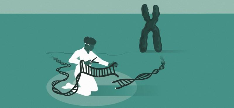 A génszerkesztés kifejlesztéséért járt idén a kémiai Nobel-díj