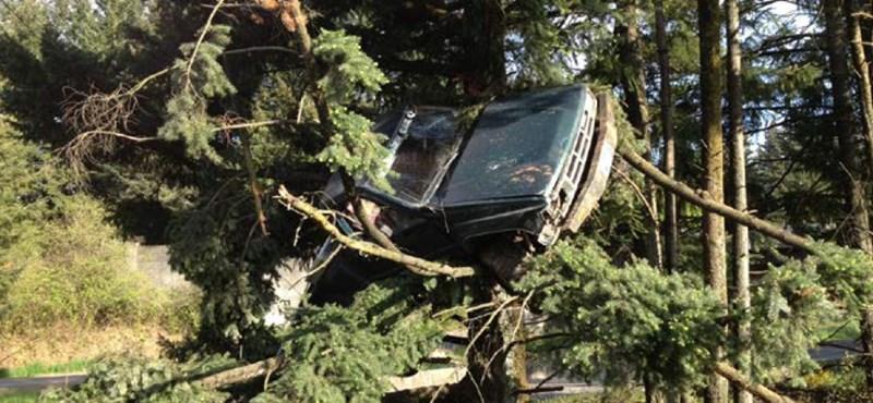 Fa tetején landolt a kisteherautó, de hogyan? – fotó