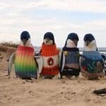 Színes pulóverrel védik a pingvineket az olajtól?