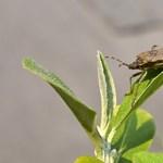 A legjobb fegyver a poloska ellen: a szúnyogháló és a mobiltelefon