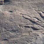 220 millió éves lábnyomot talált egy kislány