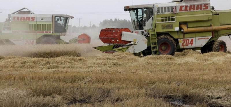 Jó minőségű gabona termett, vége az aratásnak