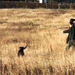 Kezdődik a vadászati idény - mit várhat Magyarország?