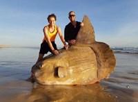 Ez történt: akkora hal tetemére bukkantak, hogy el sem hitték, mit látnak