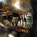 Az Alien második része is visszatér a magyar mozikba