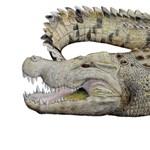 Találtak egy 8 millió éves koponyát, így sikerült azonosítani egy eddig ismeretlen fajt