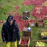 iGenius: hogyan változtatta meg Steve Jobs a világot?