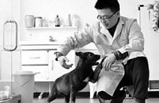 Kínai tudósok klónozták a rendőrkutyák Sherlock Holmesát