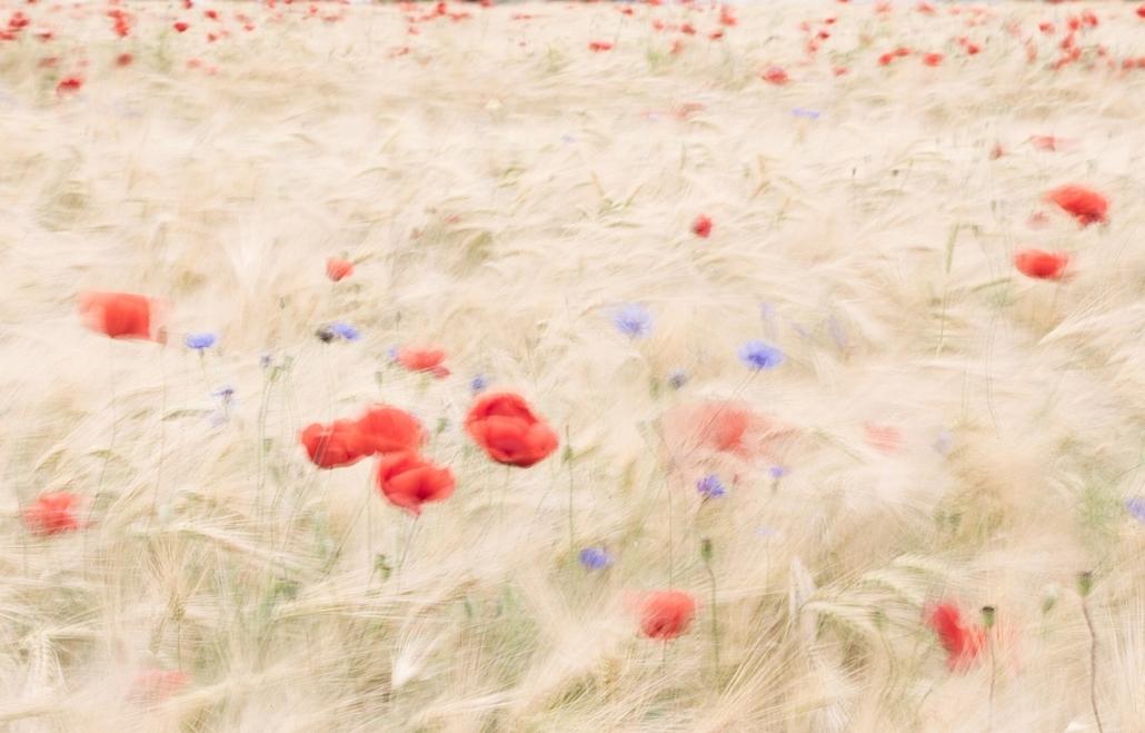 NE HASZNÁLD! - canon év természetfotósa, 2015 természetfotó, VII. Növények és gombák, 2. díj - Széllel festett