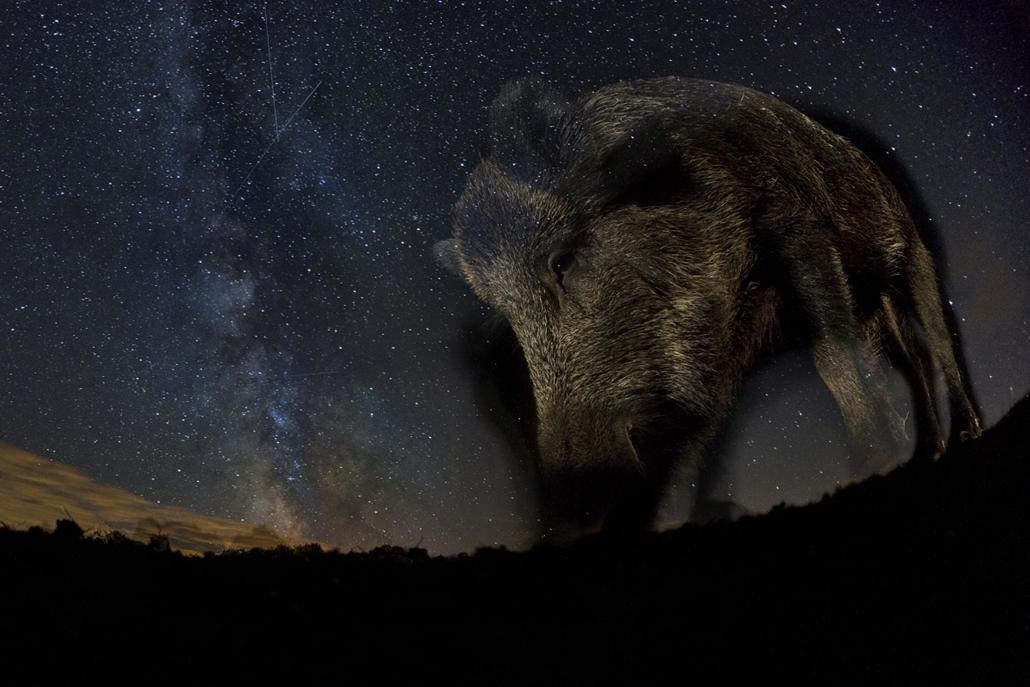 NE HASZNÁLD! - canon év természetfotósa, 2015 természetfotó, XI. Napnyugtától napkeltéig, 2. díj - Tejút