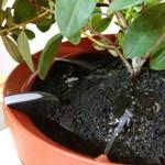 Készült egy virágcserép azoknak, akik elfelejtik meglocsolni a növényeket – leteszteltük