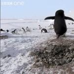 Hogyan bűnöznek a pingvinek?