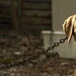 Javítóintézetbe zárhatják a deteki kutyakínzót, társára felfüggesztettet kértek