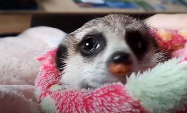 Videó: Ledobta a karácsonyi cukiságbombát a fővárosi állatkert