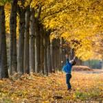 Felpörög a tanév: A legfontosabb októberi dátumok
