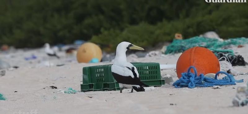6 tonna műanyagot szedtek össze egy lakatlan szigeten a Csendes-óceánon, de nem ez a legszomorúbb