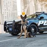 Autós üldözésre alkalmas rendőrségi hibriddel rukkolt ki a Ford, ráadásul a benzines elődnél kétszer jobb hatótávval