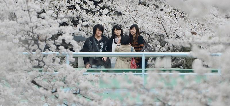 Lassan járnak a vonatok, lehet gyönyörködni a cseresznyefa-virágzásban