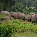 Szelfiző embert ölt az elefánt