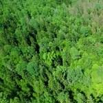 A lengyel környezetvédelmi miniszter fakitermelést engedélyezett a védett erdőségben