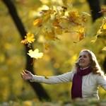 Nehézkes az erdők visszaigénylése Romániában