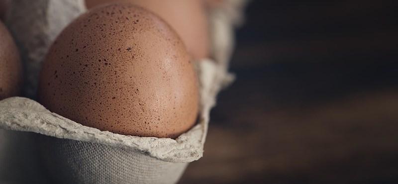 Szalmonella ütötte fel a fejét Mészáros gazdaságában, a Lidlbe is kerültek a szennyezett tojásokból