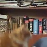 Ezúttal egy macska trollkodott bele az élő bejelentkezésbe - videó