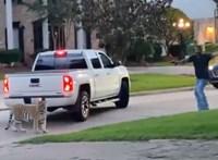 Tigrissel az autójában menekült a rendőrök elől egy houstoni férfi – videó