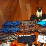 Notórius alsónadrág- és zoknilopó macskát füleltek le Új-Zélandon