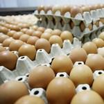 Nem tojnak elég tojást a magyar tyúkok