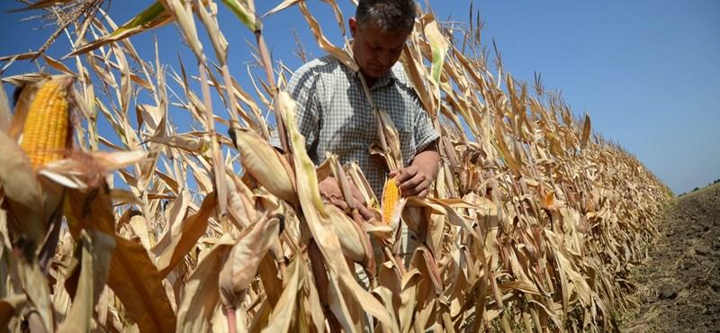 A brutális szárazság miatt durván drágulhatnak az élelmiszerek