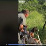 Különleges kutyákat vetnek be az orvvadászok ellen Dél-Afrikában