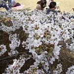 És akkor Japánban feltalálták a jövő pálinkáját: fából csinálnak szeszesitalt