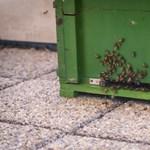 Méhcsalád költözött az Agrárminisztériumba