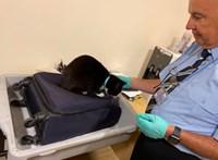 A reptéren derült ki, hogy a brit pár a macskát is bepakolta