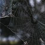 Lábukban tárolják agyuk egy részét a pókok