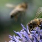 Négy órát késett egy indonéziai repülő egy méh miatt