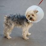 Kutya, kisfiú, maci - gyerekbarát piktogramokat szavaztat a médiatanács