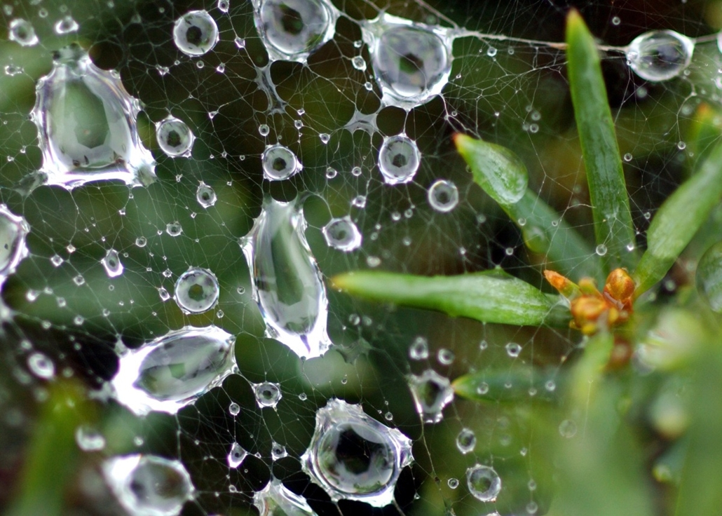 afp. pók, pókháló, nagyítás - 2003.08.23. GERMANY, Potsdam : (dpa) - A view of raindrops caught in a spider web in-between plants in Potsdam, Germany, 23 August 2003.