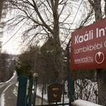 Politikai utasításra szorítják ki Debrecenből a Kaáli Intézetet