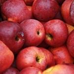 Heti négyszer kapnak gyümölcsöt vagy zöldséget a diákok: folytatódik a program