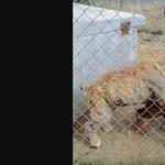 166 kutyát mentettek ki egy nyírbogáti pártól
