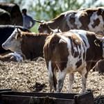Tízmilliárdokat osztanak szét a hazai termelők és az élelmiszeripari cégek között