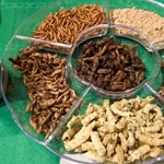 Az agrárminiszter: a törvény teljes szigora vár a rovarral etetőkre