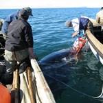 """""""A bálna már a miénk"""" - tengeri vadászaton voltunk Csukcsföldön"""