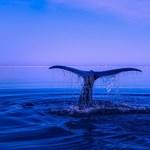 Ősi négylábú bálna maradványaira bukkantak Peruban